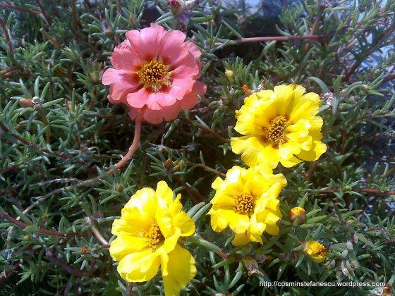 Flori de piatră - Foto Cosmin Ştefănescu