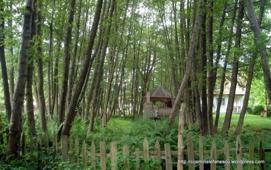 Ferigi şi copaci Costeşti - Orăştie