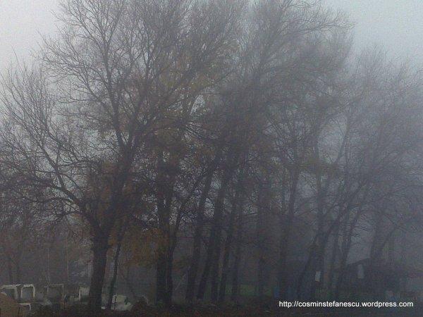 O dimineață cețoasă de noiembrie (2009 - foto: Cosmin Ștefănescu)