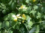 Flori galbene (2)