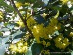 Flori galbene (3)