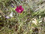 Flori roz (4)