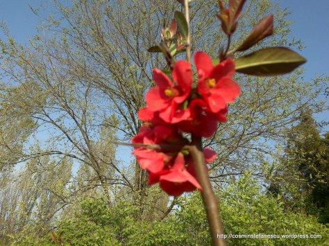 Flori roz - Foto - Cosmin Stefanescu  (4)