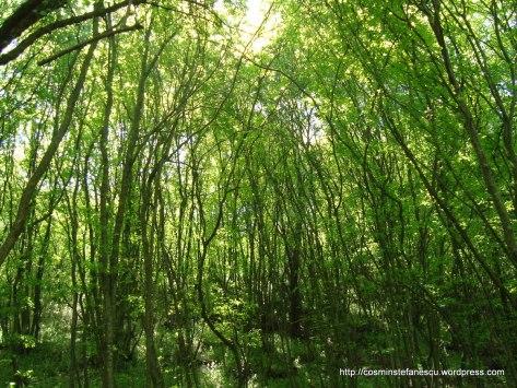 Verde crud - 1 Mai 2010 Urluia - Constanta (2) Foto: Cosmin Ștefănescu