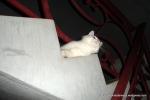 Amedeo micuț - decembrie 2006 - Foto Cosmin Ștefănescu (10)