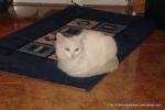 Amedeo micut - decembrie 2006 - Foto Cosmin Stefanescu (12)