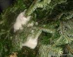 Amedeo micut - ne-a jutat să împodobim bradul - decembrie 2006 - Foto Cosmin Stefanescu (13)