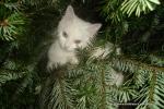 Amedeo micut ne oferă o mână de ajutor - decembrie 2006 - Foto Cosmin Stefanescu (14)