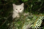 Amedeo micut în brad - decembrie 2006 - Foto Cosmin Stefanescu (16)