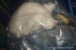 Amedeo micut - decembrie 2006 - Foto Cosmin Stefanescu (17)
