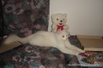 Amedeo micut - decembrie 2006 - Foto Cosmin Stefanescu (18)