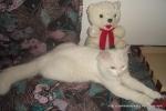 Amedeo micuț - decembrie 2006 - Foto Cosmin Ștefănescu (19)