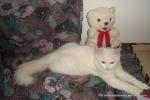 Amedeo micuț - decembrie 2006 - Foto Cosmin Ștefănescu (20)