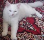 Amedeo micut - decembrie 2006 - Foto Cosmin Stefanescu (25)