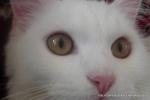 Amedeo micut - decembrie 2006 - Foto Cosmin Stefanescu (26)
