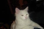 Amedeo micut - decembrie 2006 - Foto Cosmin Stefanescu (27)
