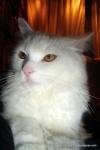Amedeo micut - decembrie 2006 - Foto Cosmin Stefanescu (28)