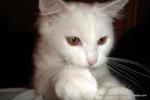Amedeo micut - șase luni - decembrie 2006 - Foto Cosmin Stefanescu (4)