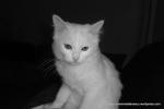 Amedeo micut - decembrie 2006 - Foto Cosmin Stefanescu (5)