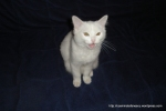Amedeo micut - decembrie 2006 - Foto Cosmin Stefanescu (6)
