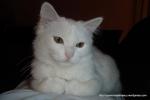 Amedeo micut - decembrie 2006 - Foto Cosmin Stefanescu