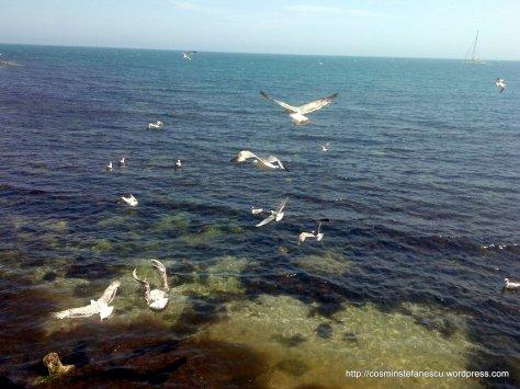 Pescaruși zburând frenetic - Nessebar Bulgaria - Foto Cosmin Stefanescu Mai 2010