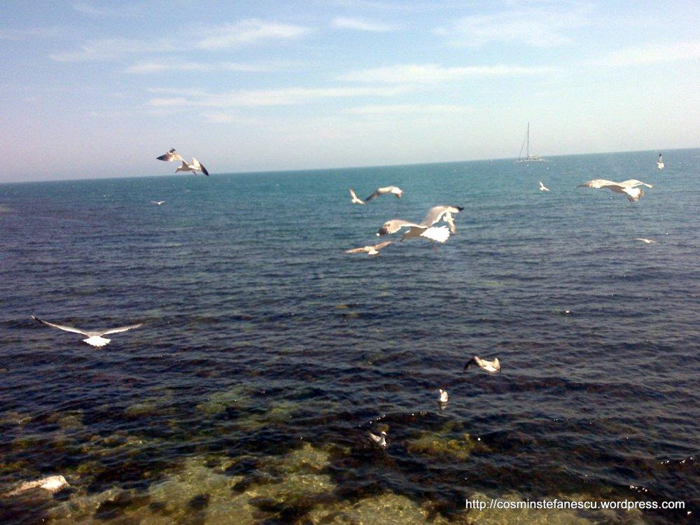 Pescaruși într-un zbor diafan - Nessebar Bulgaria Foto Cosmin Stefanescu Mai 2010 (2)