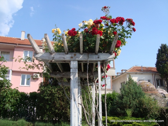 Trandafiri - explozie de culoare - Foto Cosmin Stefanescu (3)