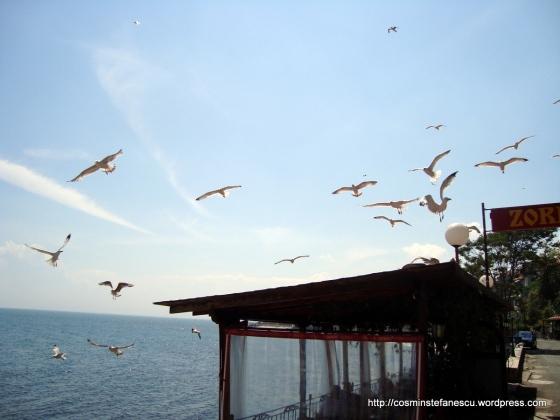 Pescarusi - Nessebar Bulgaria - Marea Neagra - Foto Cosmin Stefanescu
