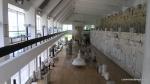 Adamclisi - Judetul Constanta - Romania - Muzeul Tropaeum Traiani - Vedere de ansamblu a exponatelor din muzeu - Foto Cosmin Stefanescu (20)