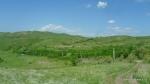 Colilie - Stipa tirsa - Zona vulcanii noroiosi - Berca, Buzau - Foto - Cosmin Stefanescu (3)