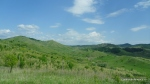 Colilie - Stipa tirsa - Zona vulcanii noroiosi - Berca, Buzau - Foto - Cosmin Stefanescu (4)