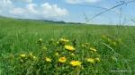 Flora specifica din zona Vulcanii noroiosi - Berca, Buzau - Foto Cosmin Stefanescu (1)