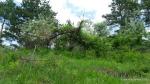 Maces - Rosa canina - Zona Vulcanii noroiosi - Berca, Buzau (4)
