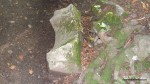 Murus dacicus - Zidul cetatii  - Sarmisegetusa Regia,  Orastioara de sus, Muntii Sureanu, Hunedoara, Romania - Fotografii relizate de Henry Cosmin Florentin Stefanescu  (15)