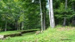 Murus dacicus - Zidul cetatii  - Sarmisegetusa Regia,  Orastioara de sus, Muntii Sureanu, Hunedoara, Romania - Fotografii relizate de Henry Cosmin Florentin Stefanescu  (7)