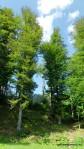 Sarmisegetusa Regia, locul care parca atinge cu crengile cerul -  Orastioara de sus, Muntii Sureanu, Hunedoara, Romania - Fotografii relizate de Henry Cosmin Florentin Stefanescu (1)