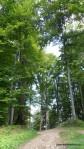 Sarmisegetusa Regia, locul care parca atinge cu crengile cerul -  Orastioara de sus, Muntii Sureanu, Hunedoara, Romania - Fotografii relizate de Henry Cosmin Florentin Stefanescu (11)