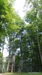 Sarmisegetusa Regia, locul care parca atinge cu crengile cerul -  Orastioara de sus, Muntii Sureanu, Hunedoara, Romania - Fotografii relizate de Henry Cosmin Florentin Stefanescu (12)