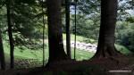 Templul de calcar  - Sarmisegetusa Regia,  Orastioara de sus, Muntii Sureanu, Hunedoara, Romania - Fotografii relizate de Henry Cosmin Florentin Stefanescu (6)
